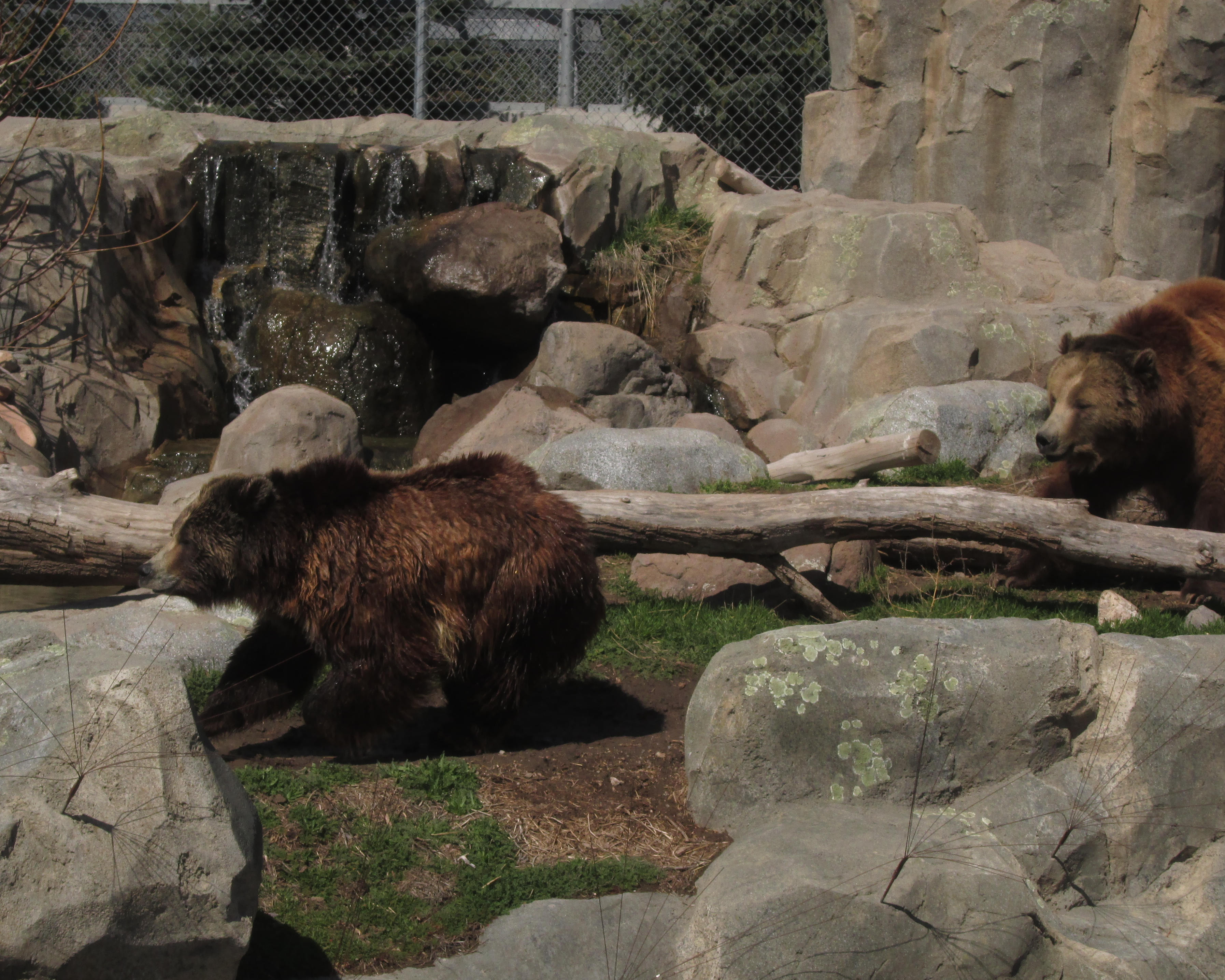 Active Grizzlies